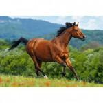 Puzzle 1000 pièces : Cheval roux brun