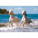 Puzzle 1000 pièces : Chevaux blancs de Camargue