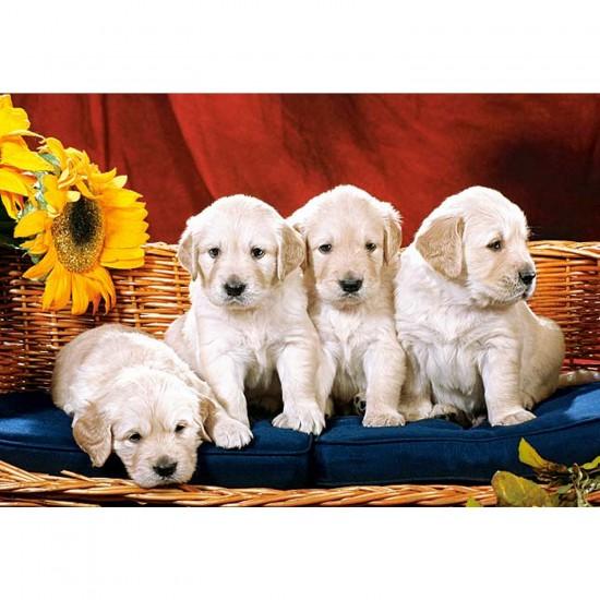 Puzzle 1000 pièces - Petits chiens dociles - Castorland-101771