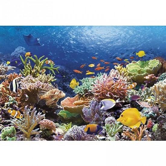 Puzzle 1000 pièces - Récif de corail - Castorland-101511