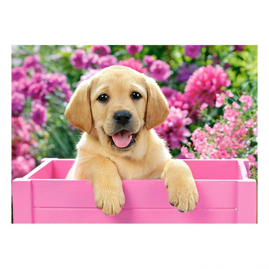 Puzzle 300 pièces : Labrador dans une boîte rose - Castorland-030071