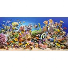 Puzzle 4000 pièces : Vie sous-marine