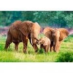 Puzzle 500 pièces : Famille d'éléphants
