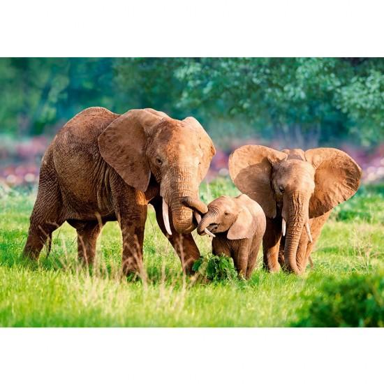 Puzzle 500 pièces : Famille d'éléphants - Castorland-52196