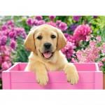Puzzle 500 pièces : Labrador dans une boîte rose