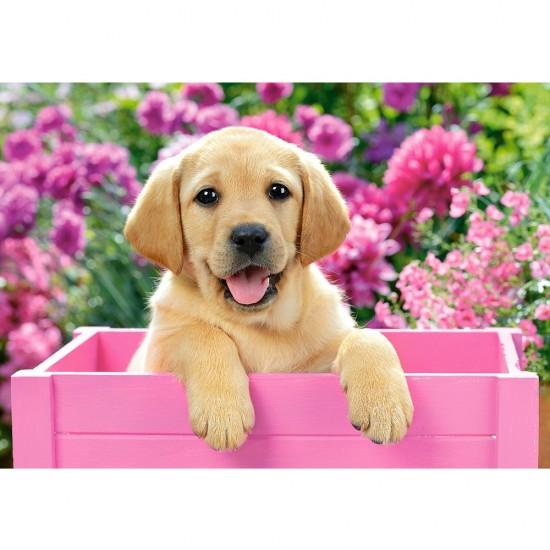 Puzzle 500 pièces : Labrador dans une boîte rose - Castorland-52226