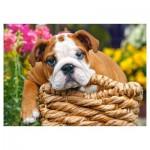 Puzzle 70 pièces : Doux Bulldog
