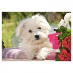 Puzzle 70 pièces : White Terrier