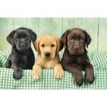 Puzzle 1000 chiens : Trio de labradors