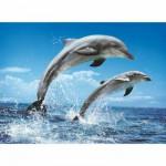 Puzzle 1000 pièces - Duo de dauphins