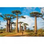 Puzzle 1000 pièces : Baobabs à Madagascar