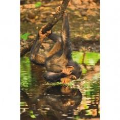 Puzzle 1000 pièces : Bébé chimpanzé