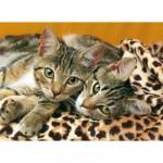 Puzzle 1000 pièces : Dans les yeux des chats