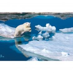 Puzzle 1000 pièces : National Geographic : Ours blanc sur la banquise