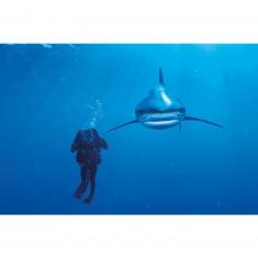 Puzzle 1000 pièces : National Geographic : Requin longimane