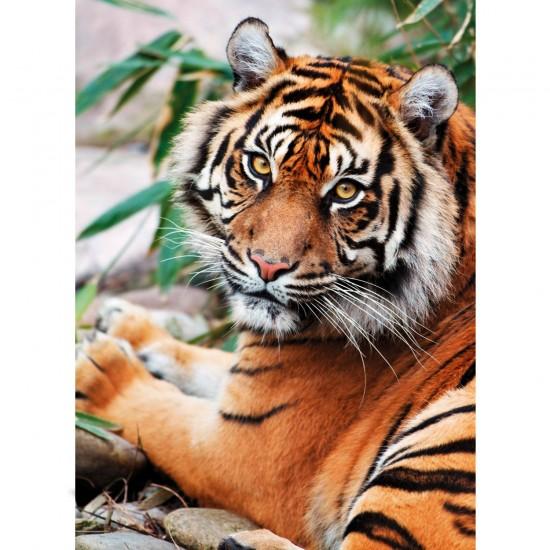 Puzzle 1000 pièces : Tigre de Sumatra - Clementoni-39295