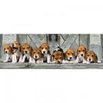 Puzzle 1000 pièces panoramique - Beagle