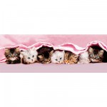Puzzle 1000 pièces panoramique - Petits chats alignés
