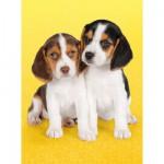 Puzzle 500 pièces : Chiots beagles