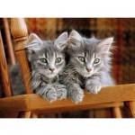Puzzle 500 pièces : Deux chatons aux aguets
