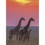 Puzzle 500 pièces : Girafes