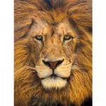 Puzzle 500 pièces : Portrait de lion