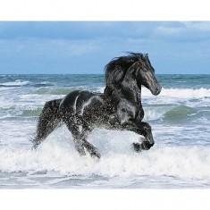 Puzzle 500 pièces - Cheval noir