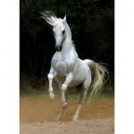 Puzzle 1000 pièces - Chevaux : Cheval blanc