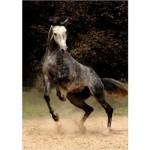 Puzzle 239 pièces - Magie des chevaux : Cheval arabe II