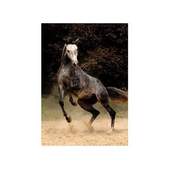 Puzzle 239 pièces - Magie des chevaux : Cheval arabe II - DToys-65940MH02