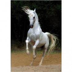 Puzzle 239 pièces - Magie des chevaux : Cheval arabe III