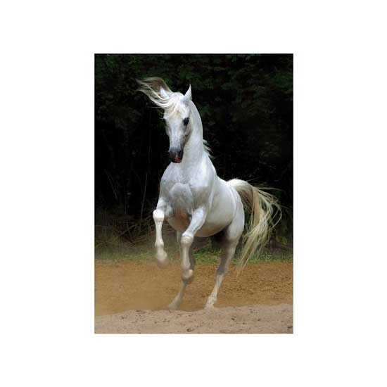 Puzzle 239 pièces - Magie des chevaux : Cheval arabe III - DToys-65940MH03