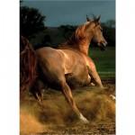 Puzzle 239 pièces - Magie des chevaux : Cheval arabe IV