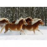 Puzzle 239 pièces - Magie des chevaux : Cheval Haflinger IV