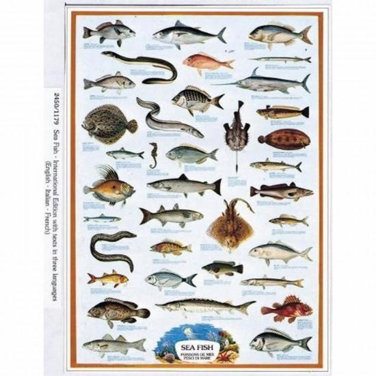 Puzzle 1000 pièces - Les poissons de mers - Ricordi-58043