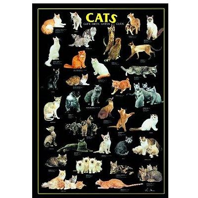 puzzle 1000 pi ces p le m le chats puzzle editions ricordi rue des puzzles. Black Bedroom Furniture Sets. Home Design Ideas