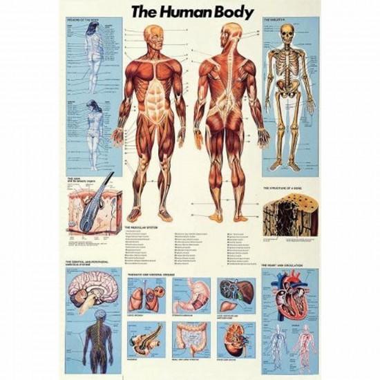 Puzzle 1000 pièces - Science : Le corps humain - Ricordi-58018