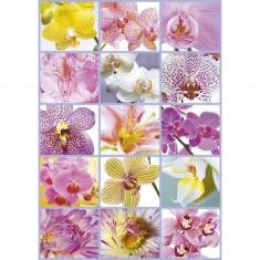 Puzzle 1500 pièces : Collage de fleurs