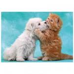 Puzzle 200 pièces : Chat et chien : Etreintes et baisers