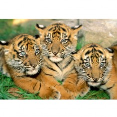 Puzzle 500 pièces : Bébés tigres