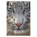 Puzzle 500 pièces : Tigre blanc