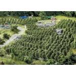 Modélisme : Végétation : 36 pieds de vigne