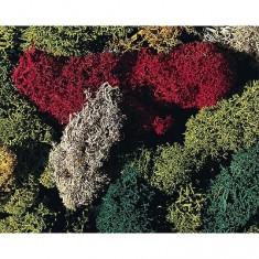 Modélisme : Végétation : Lichen 5 couleurs