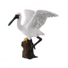 Oiseau - Spatule debout