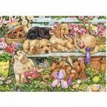 Puzzle 1000 pièces : Jolis petits chiens