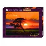 Puzzle 1000 pièces : Arbre sous le soleil