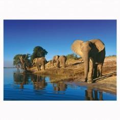 Puzzle 1000 pièces Edition Alexander Humboldt : Richard du Toit, Les trois éléphants