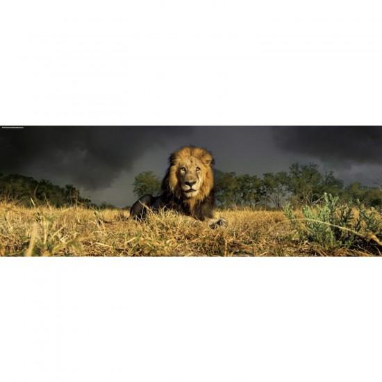 Puzzle 1000 pièces panoramique Edition Alexander Humboldt Alex Bernasconi : Lion - Heye-29518-58232