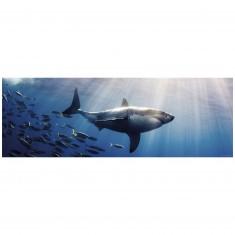 Puzzle 1000 pièces panoramique Humbolt : Requin blanc
