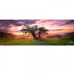 Puzzle 2000 pièces panoramique - Alexander von Humboldt : Le chêne